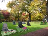 癒される墓地
