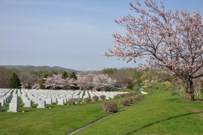 桜と墓地公園